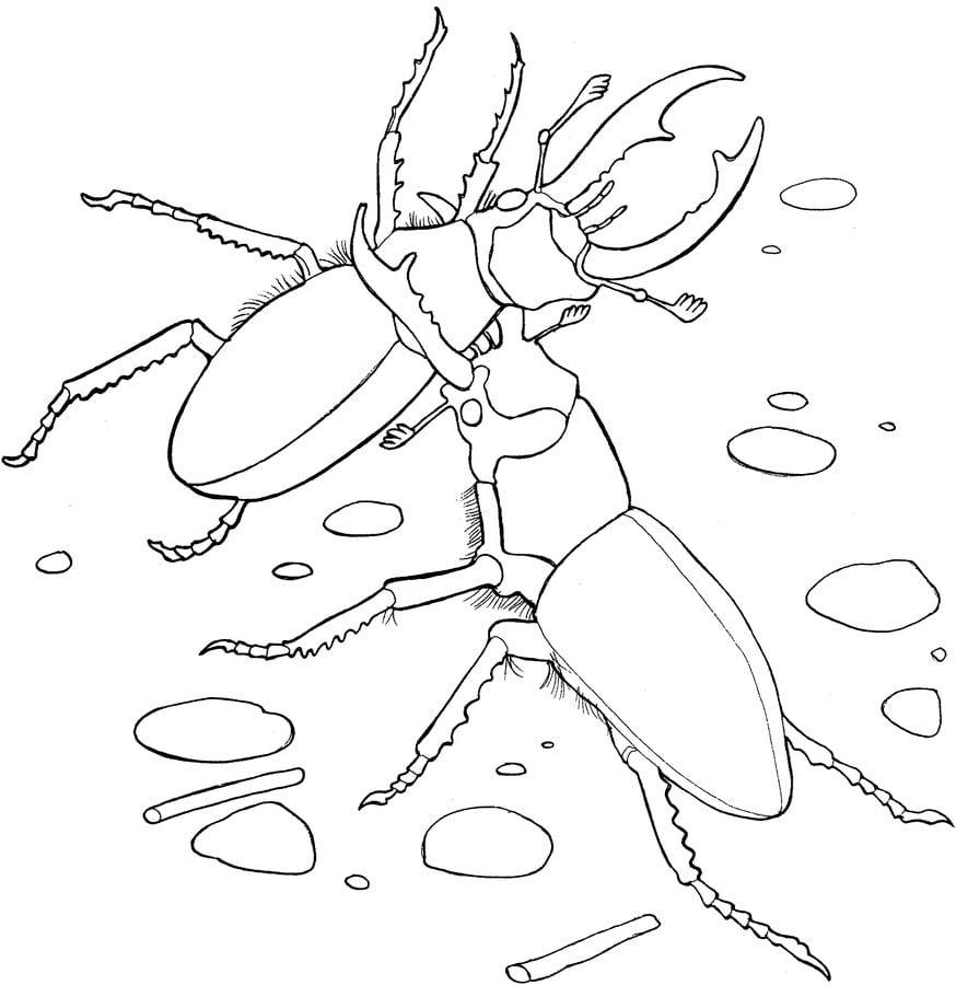 Dibujos para colorear: Escarabajos imprimible, gratis, para los ...