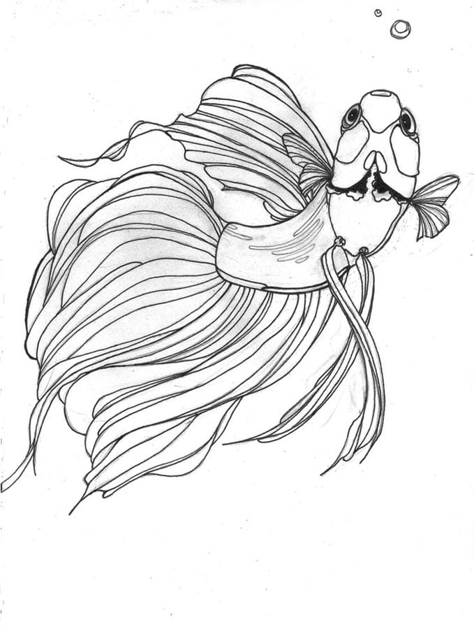 Betta Fish Animals Coloring Pages
