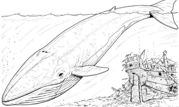 Coloring pages: Blue Whale