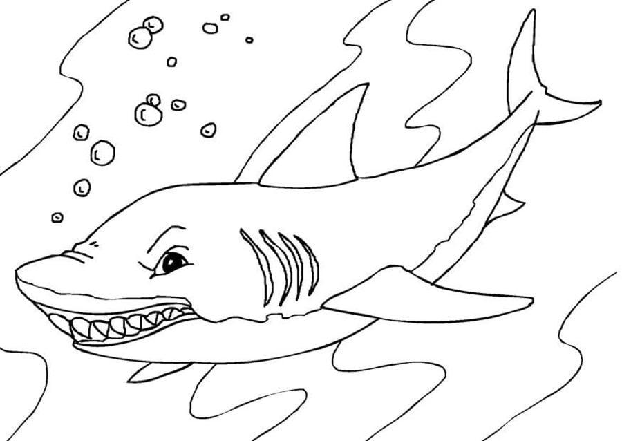 Dibujos para colorear: Tiburones azules imprimible, gratis, para los ...