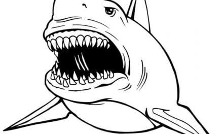 Kolorowanki: Żarłacz tępogłowy