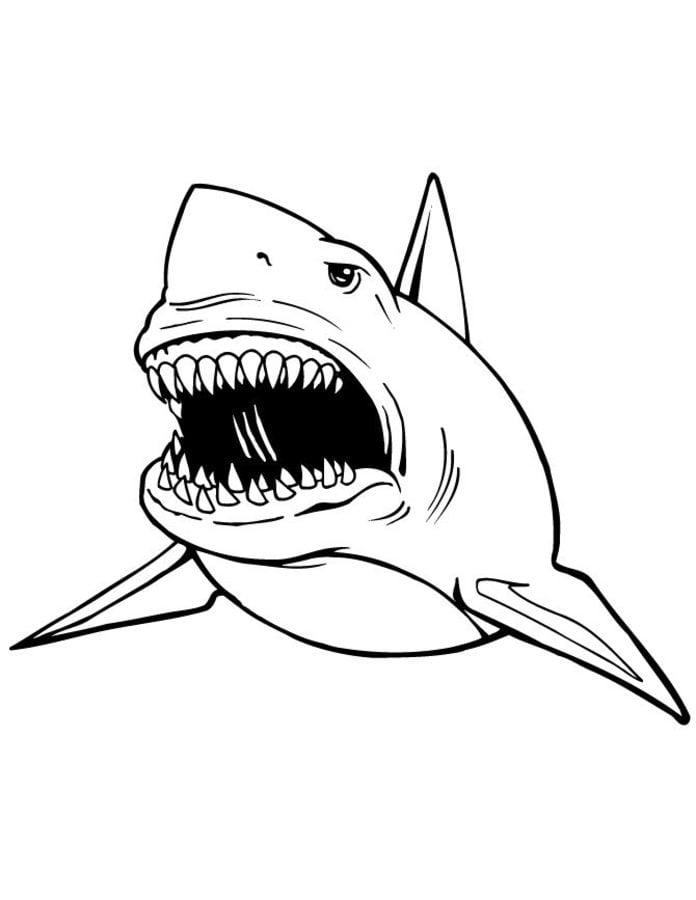 Disegni da colorare disegni da colorare squalo leuca - Pagine da colorare pesci per adulti ...
