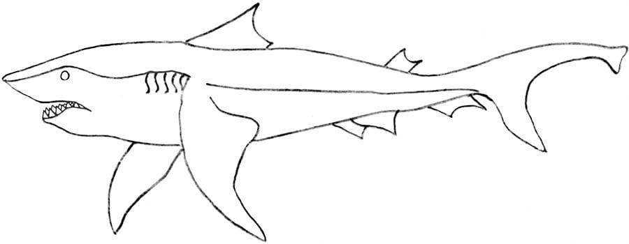 Disegni da colorare squalo leuca stampabile gratuito for Sharks coloring pages printable