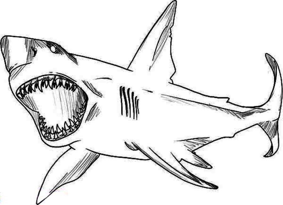 Disegni da colorare squalo leuca stampabile gratuito for Immagini squali da stampare