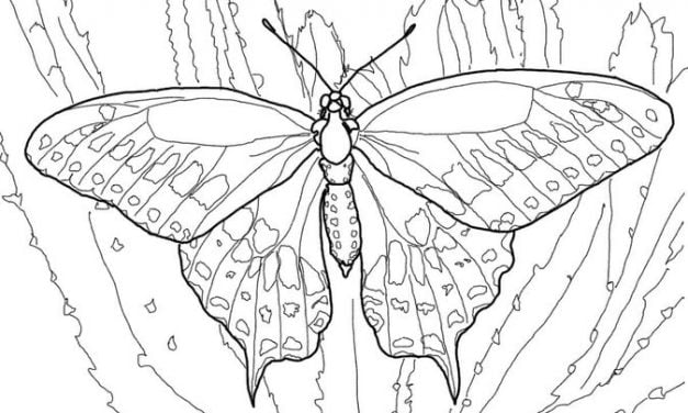 Coloring pages: Butterfly
