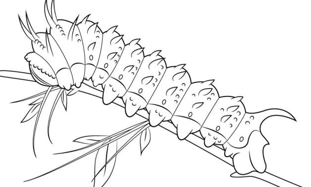Coloring pages: Caterpillar