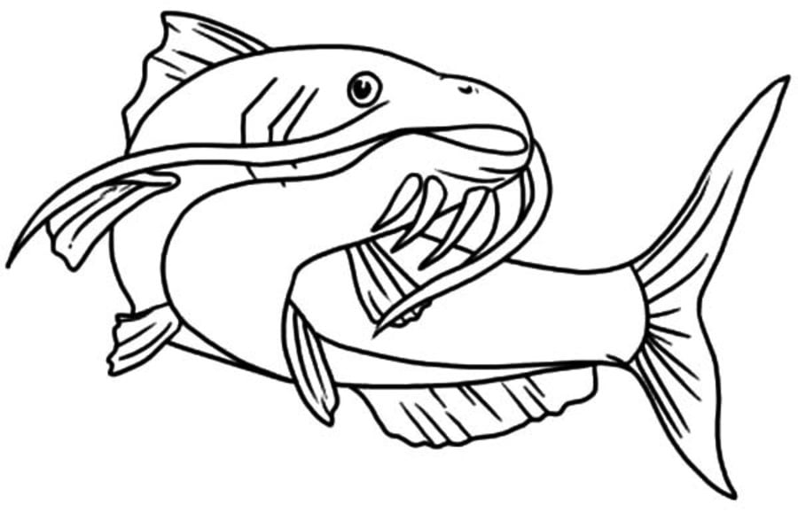 Catfish 18 Coloring Page Supercoloring