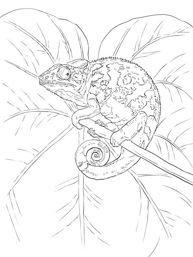 Dibujos para colorear: Camaleón imprimible, gratis, para los niños y ...