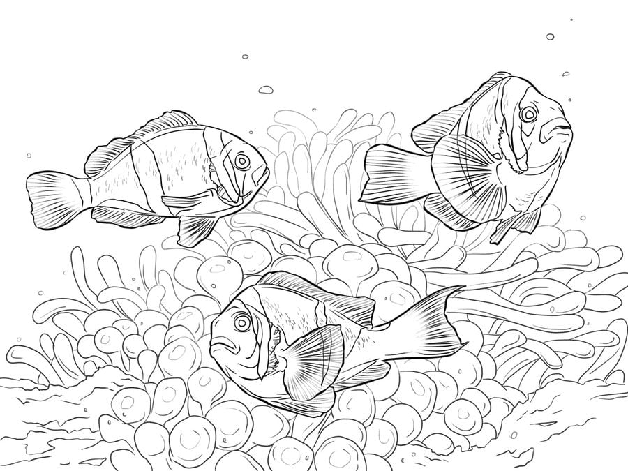 Picture Of Clown Fish Coloring Pages : Best Place to Color | 675x900