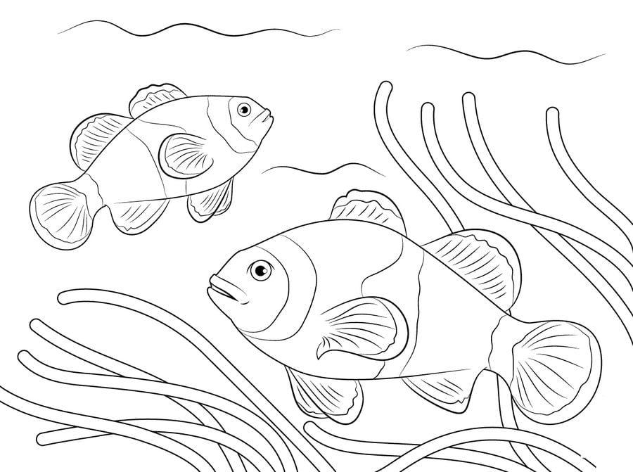Disegni da colorare disegni da colorare pesce pagliaccio for Disegno pagliaccio da colorare
