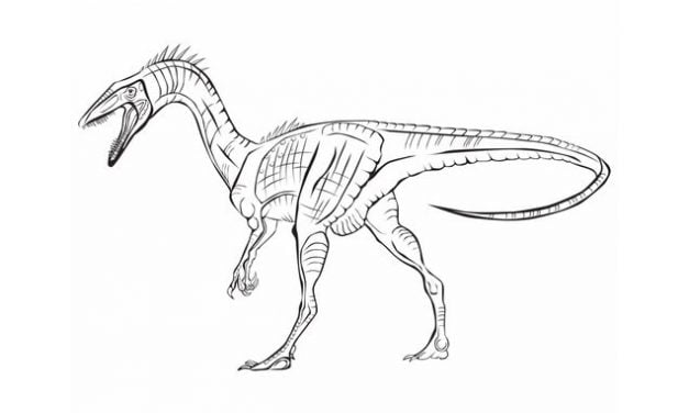 Coloring pages: Coelophysis