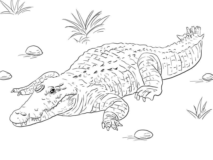 ausmalbilder ausmalbilder krokodil zum ausdrucken