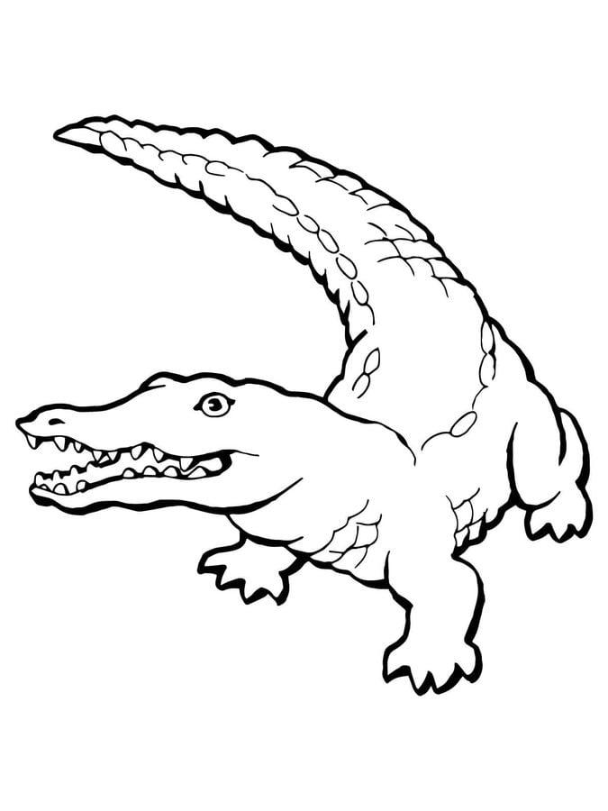 Ausmalbilder Ausmalbilder Krokodil Zum Ausdrucken Kostenlos Für