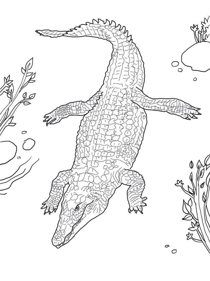 Rettili e anfibi da colorare foto di serpenti per for Coccodrillo da colorare