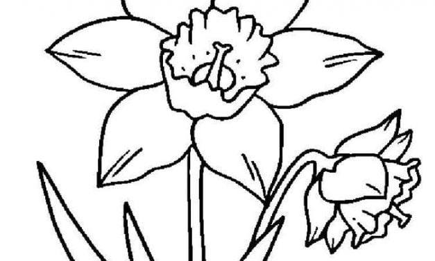 Coloring pages: Daffodil