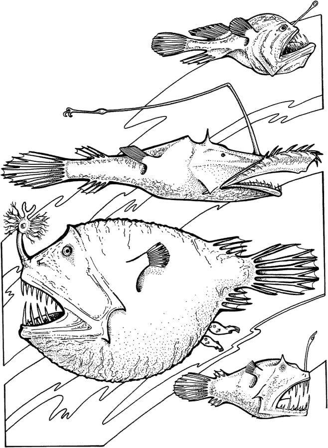Ausmalbilder Tiefseefische Zum Ausdrucken Kostenlos F 252 R