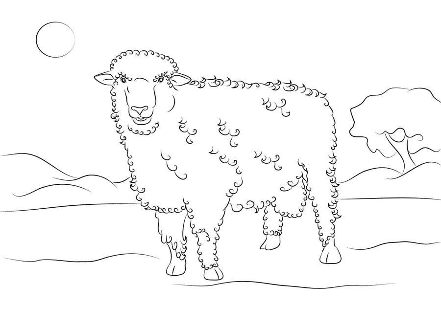 Ausmalbilder Ausmalbilder Schaf Zum Ausdrucken Kostenlos Fur Kinder Und Erwachsene