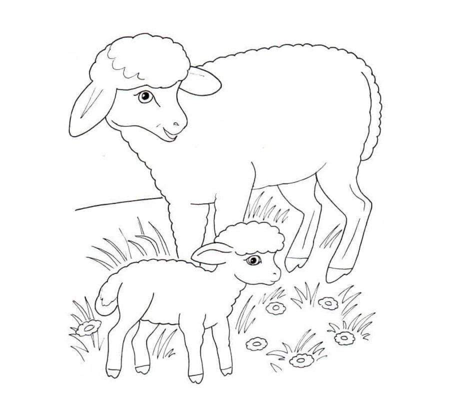 Disegni da colorare pecora stampabile gratuito per for Fattoria immagini da colorare