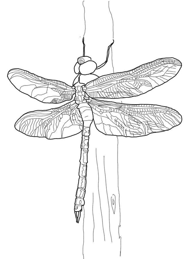 Niedlich Libelle Färbung Seite Zeitgenössisch ...