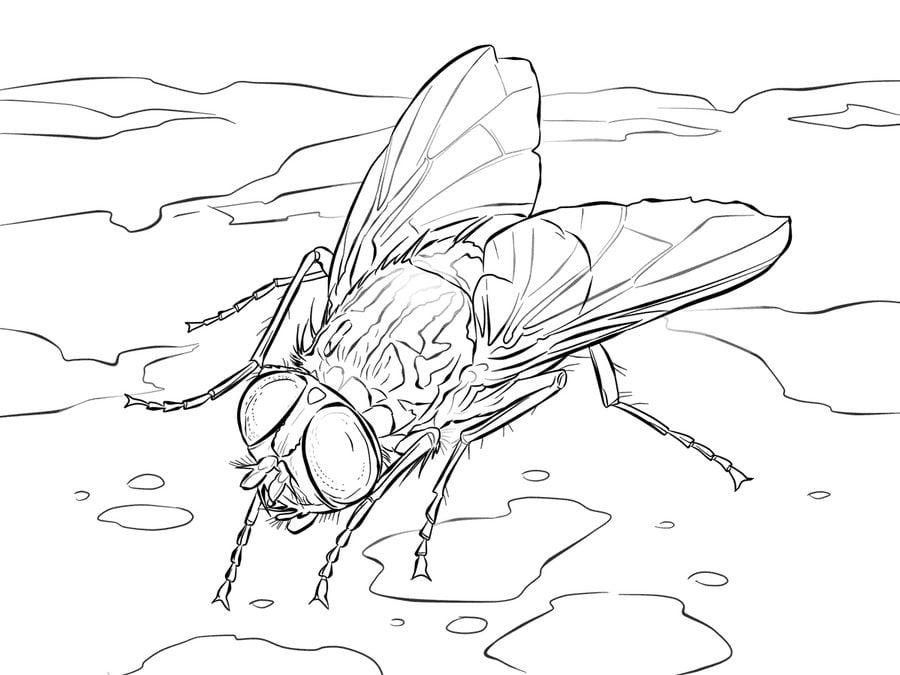 fly angel coloring pages | Dibujos para colorear: Dípteros, mosca imprimible, gratis ...