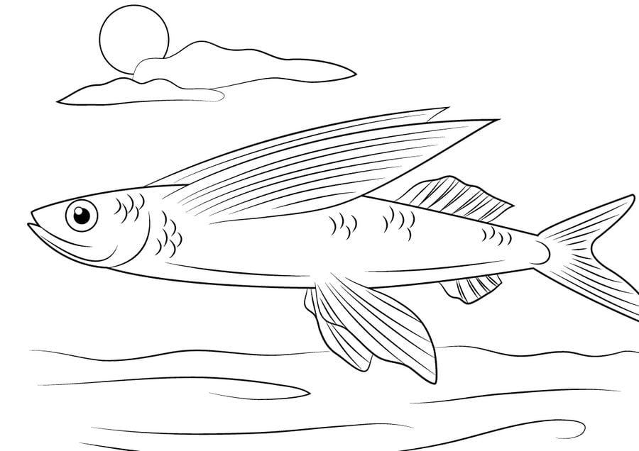Encantador Pez Volador Para Colorear Ilustración - Dibujos Para ...