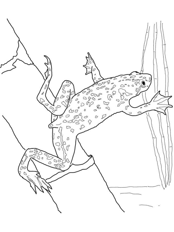 disegni da colorare  disegni da colorare  rane stampabile