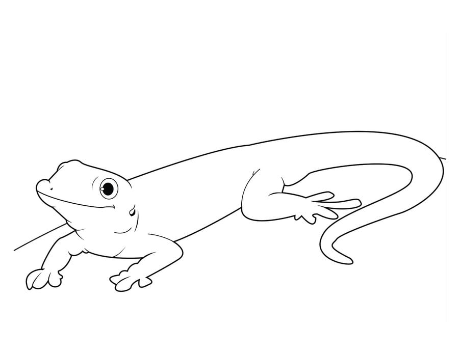 gecko lizard animals coloring pages reptiles - Gecko Coloring Pages