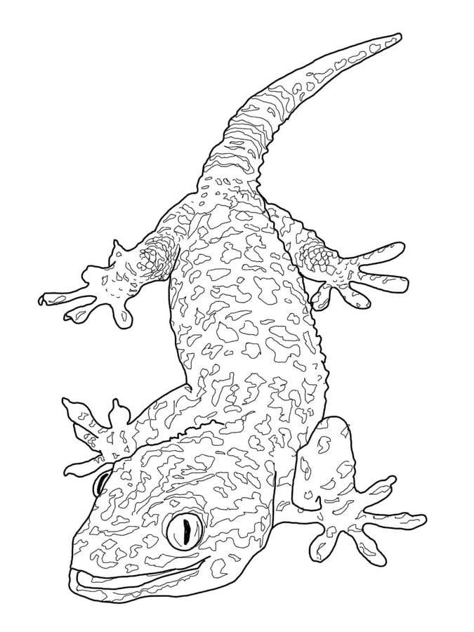 ausmalbilder gecko zum ausdrucken kostenlos für kinder
