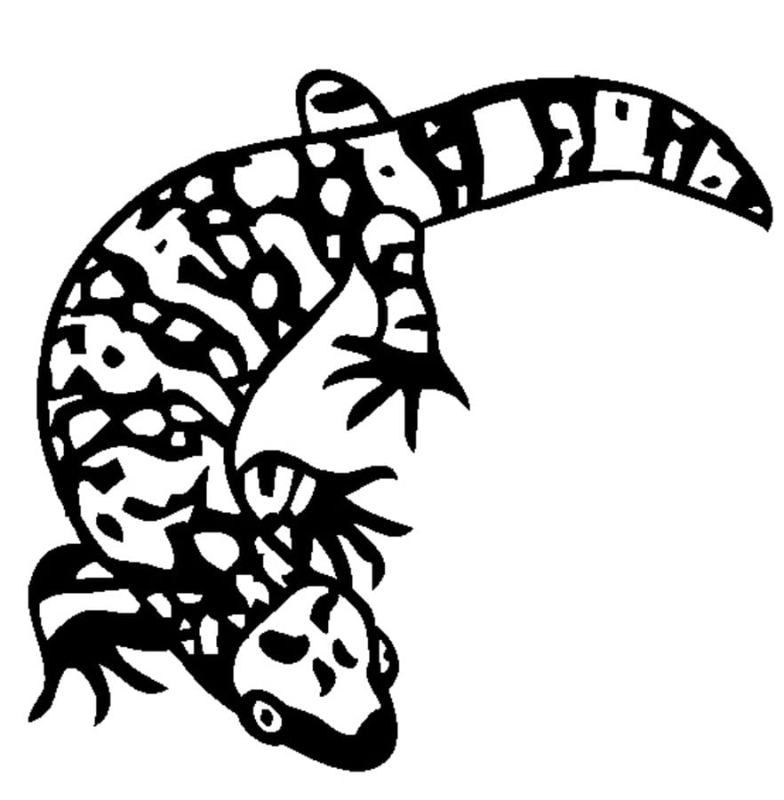 Coloring pages: Gila monster, printable for kids & adults, free