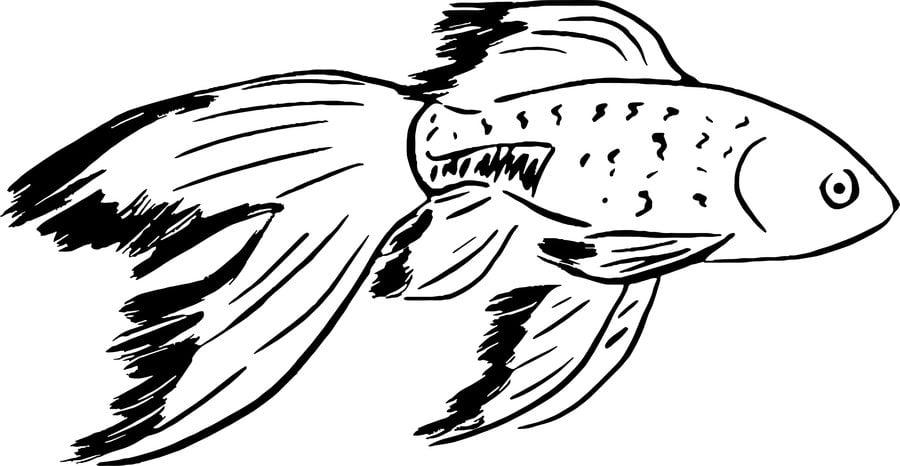 Ausmalbilder goldfische zum ausdrucken kostenlos f r for Fische goldfische