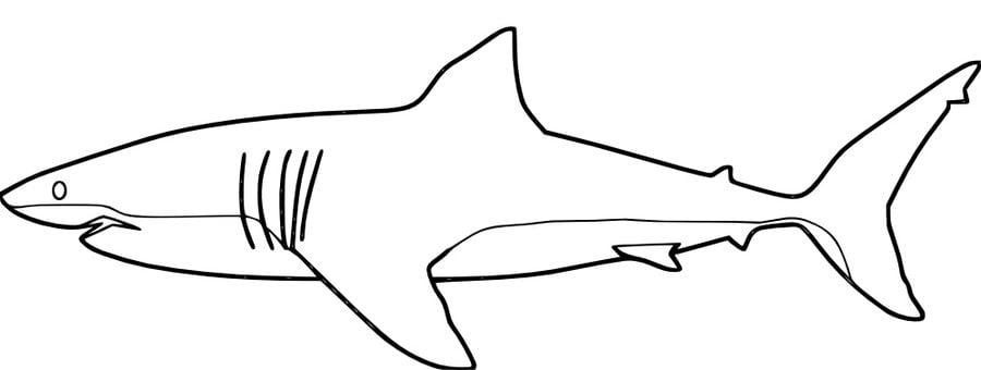 bull shark coloring pages - ausmalbilder wei er hai zum ausdrucken kostenlos f r
