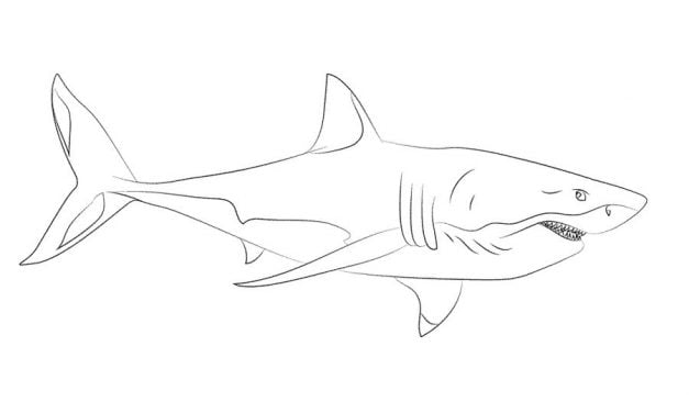 Coloring pages: Great white shark
