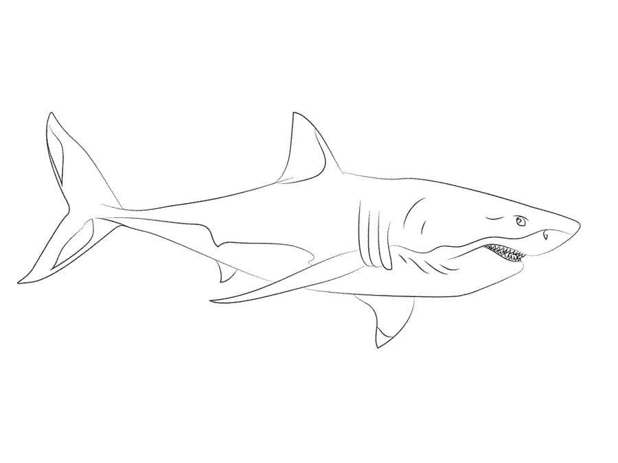Ausmalbilder: Weißer Hai zum ausdrucken, kostenlos, für Kinder und ...