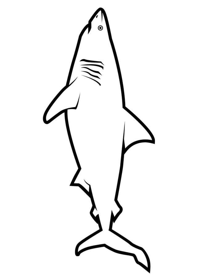 Tolle Haie Zum Ausmalen Bilder - Beispiel Wiederaufnahme Vorlagen ...