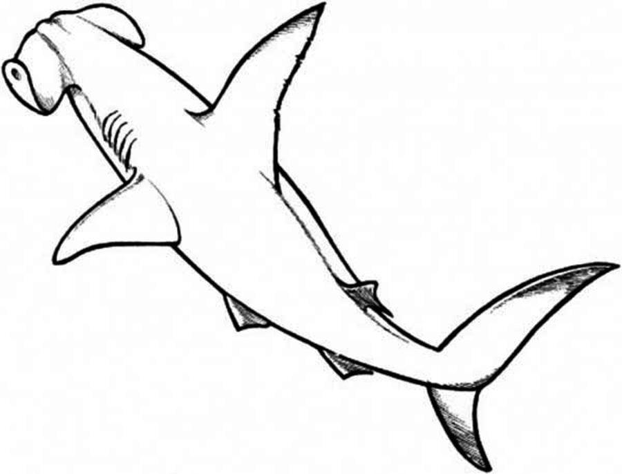 Dibujos para colorear: Tiburón martillo imprimible, gratis, para los ...
