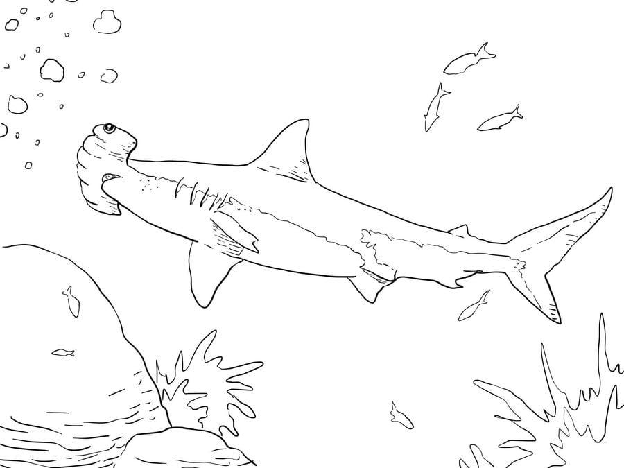 Disegni da colorare disegni da colorare squalo martello for Pesci da disegnare per bambini