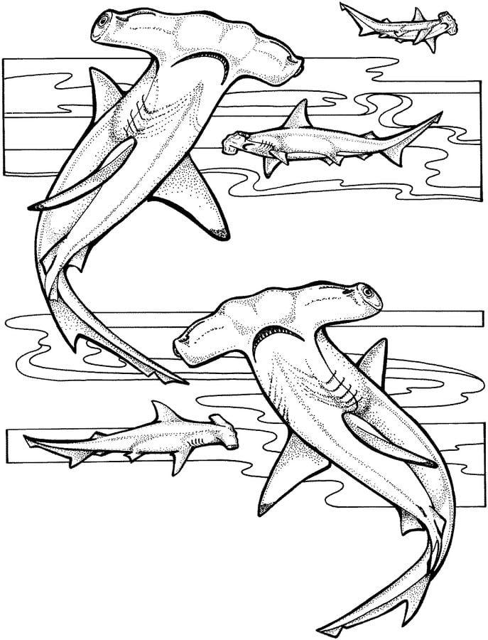 Dibujos para colorear Tiburn martillo imprimible gratis para