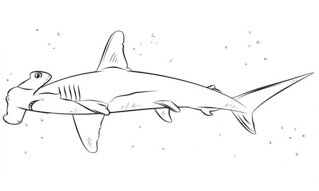 Coloring pages: Hammerhead shark