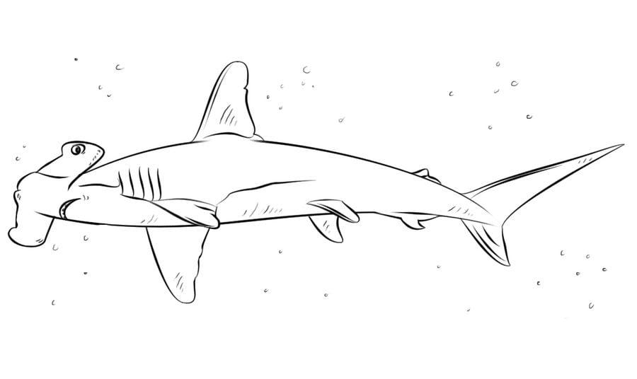 Ausmalbilder: Hammerhai zum ausdrucken, kostenlos, für Kinder und ...