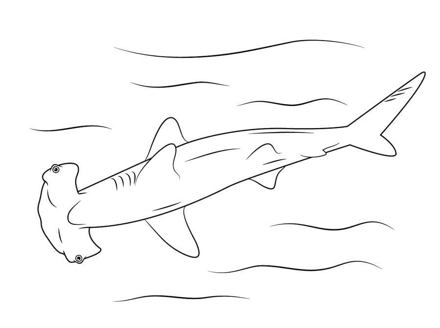 Disegni da colorare disegni da colorare squalo martello for Squalo bianco da colorare