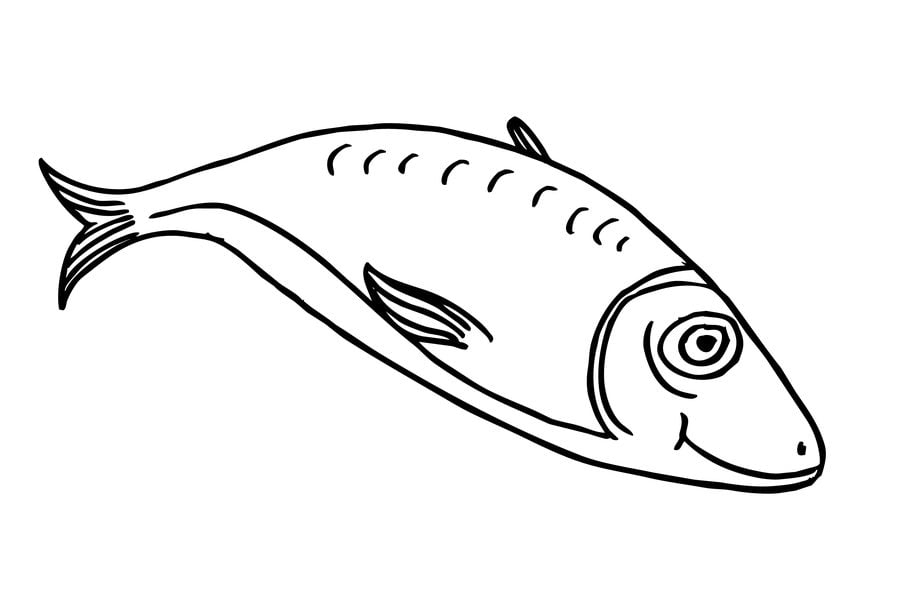 herring coloring pages - photo#39
