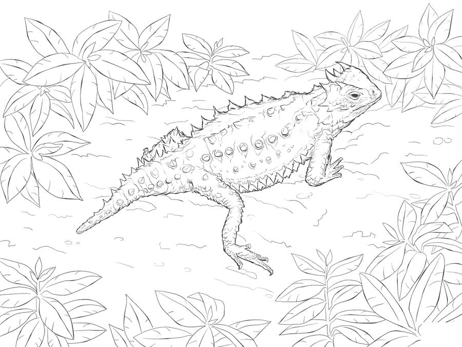 Coloring pages Coloring pages Horned lizard printable