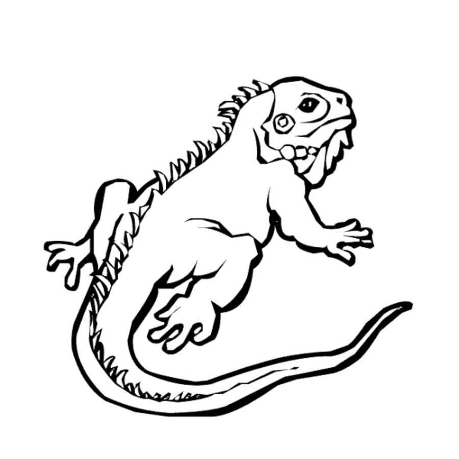 Dibujos para colorear: Iguana imprimible, gratis, para los niños y ...