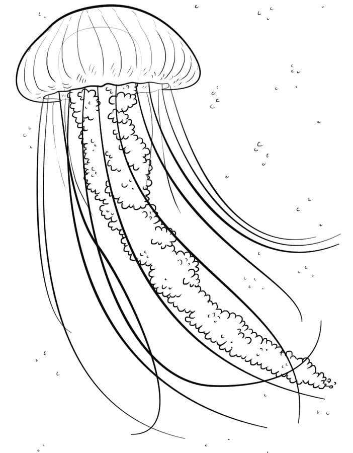 Dibujos para colorear Medusas