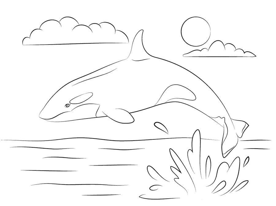 ausmalbilder killerwal zum ausdrucken kostenlos für
