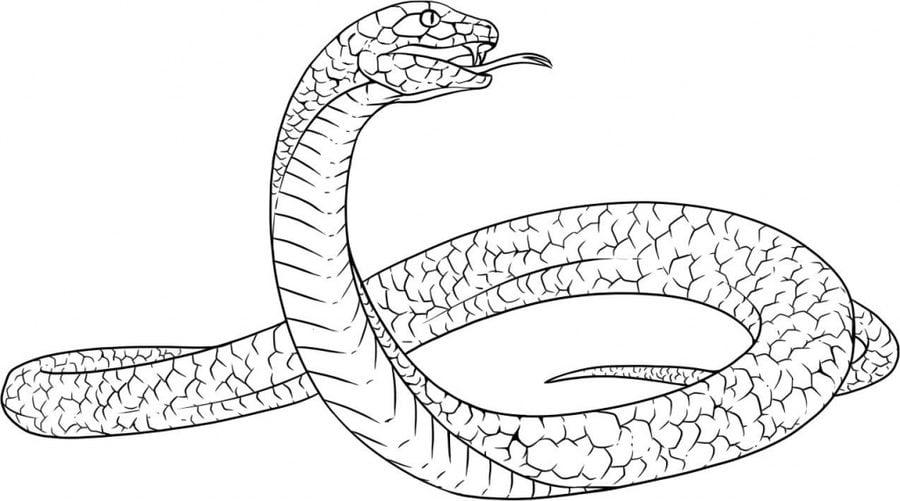 Dibujos Para Colorear Realistas: Dibujos Para Colorear: Serpientes Reales Imprimible