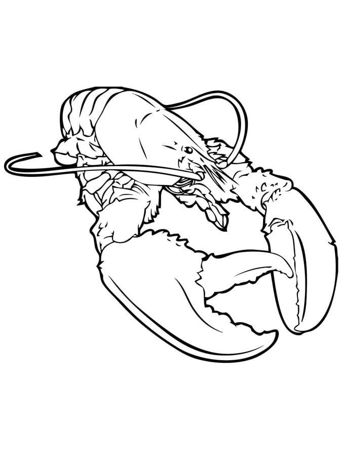 disegni da colorare  aragosta stampabile  gratuito  per bambini e adulti