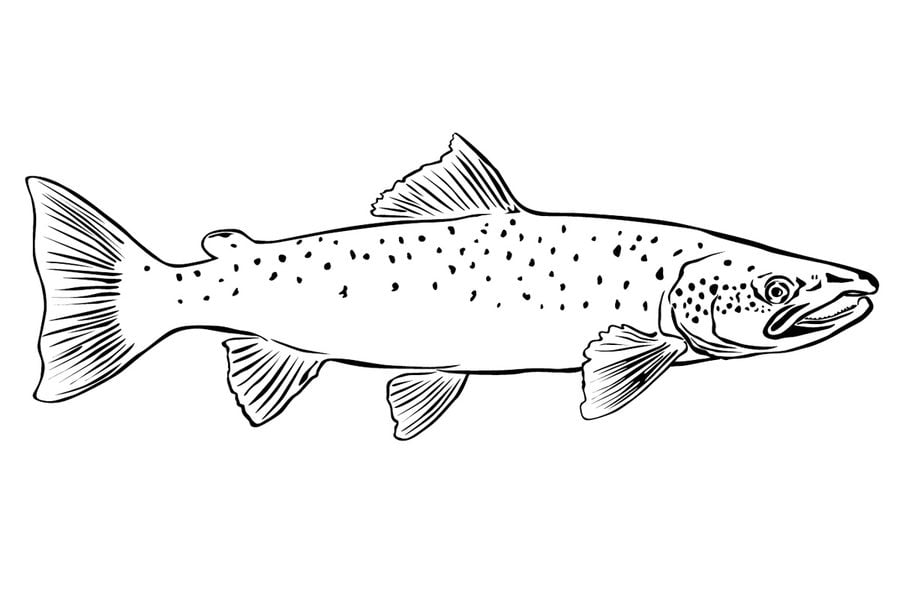 ausmalbilder makrelen zum ausdrucken kostenlos für