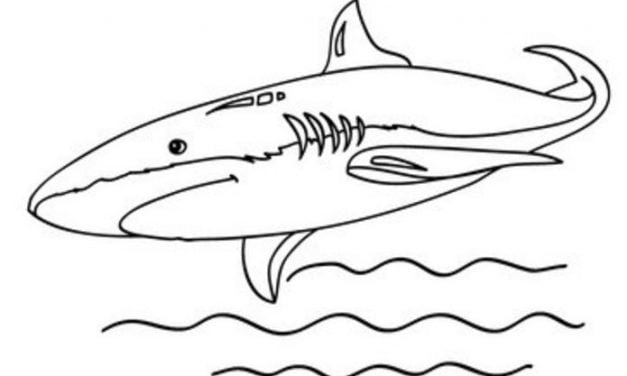 Coloring pages: Mako sharks