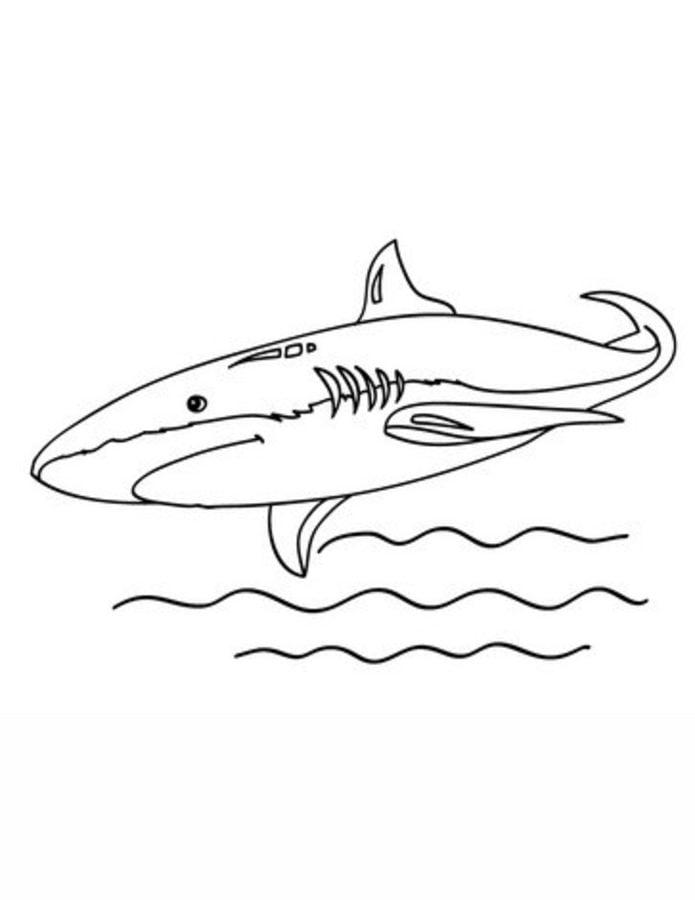 Dibujos para colorear: Tiburones mako imprimible, gratis, para los ...